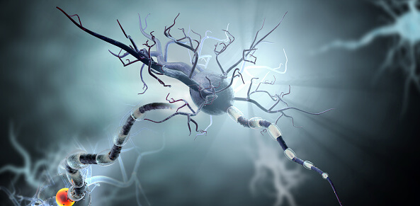 nerve cells and concept for Neurologic Diseases