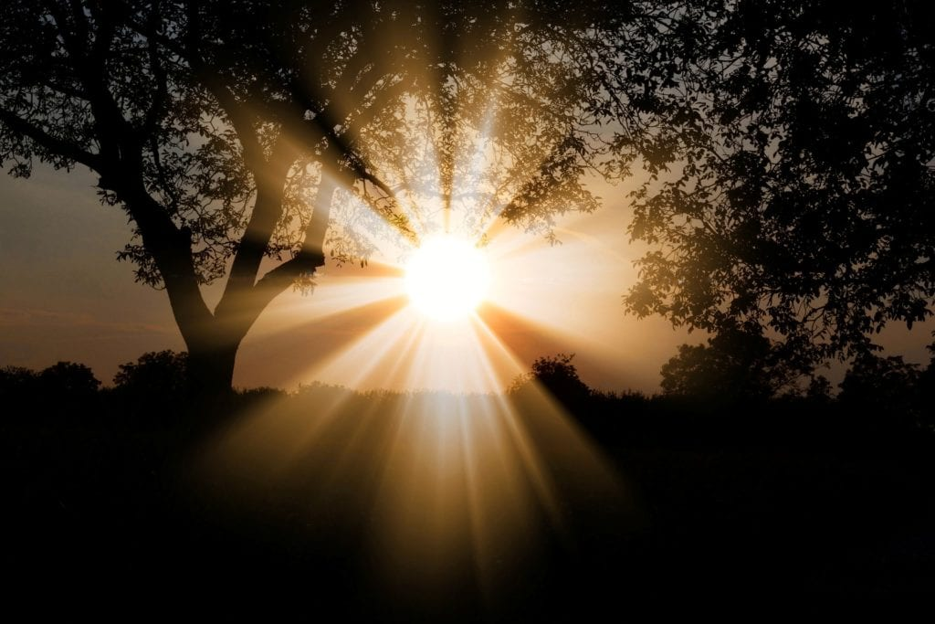 Light shining through trees. Light sensitivity can be caused by Sjodren's Syndrome.